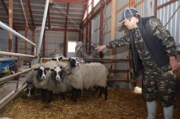 「人懐っこいので、子羊なら子供を背中に乗せて歩いてくれる」と話す松田さん