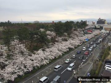 東奥日報社弘前支社屋上から見た昨年の弘前公園外堀の桜