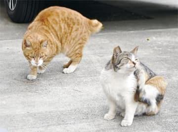 協力者の家の駐車場で過ごす地域猫