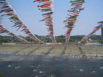 約1200匹が空を舞う「泳げ鯉のぼり相模川」@高田橋上流