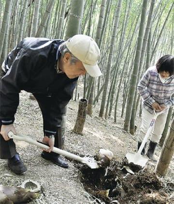 協力してタケノコを掘る(13日)