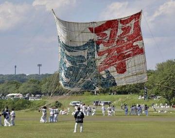 強風を受け、ふわりと舞い上がった相模の大凧=相模原市新戸スポーツ広場