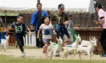 阿蘇ミルク牧場の「ダービーレース」で、子ヤギを追い掛けてゴールを目指す子どもたち=西原村
