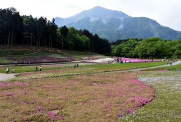 大型連休中には見頃が過ぎ、観光客が激減した「芝桜の丘」=4月30日午前、秩父市大宮の羊山公園