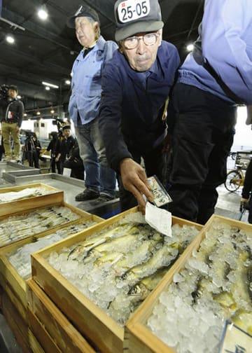 漁の解禁で初競りにかけられる長良川の天然鮎=11日午前5時57分、岐阜市茜部新所、市中央卸売市場