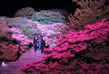 ライトアップされたミヤマキリシマを見学するツアーガイドら=仁田峠