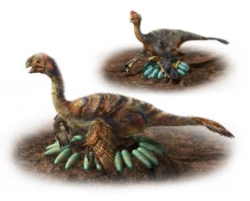 巣で卵を温めるオビラプトロサウルス類の復元図(服部雅人氏提供)