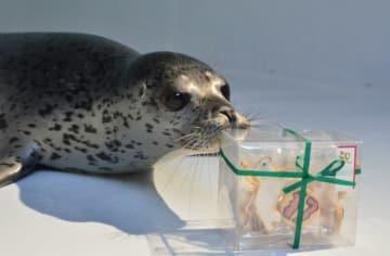 命名のお祝いに、加茂アザラシファンから「17番」クッキーをいただいた(鶴岡市立加茂水族館公式facebookページより)