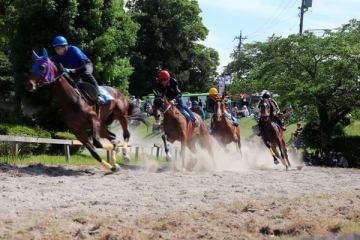 【迫力ある走りを見せる元競走馬=いなべ市大安町平塚の両ケ池公園で】