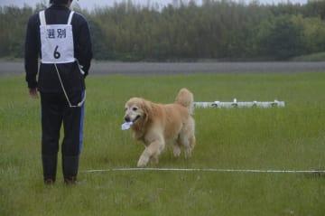 臭気選別に挑戦する犬=徳島市の県警察犬訓練場