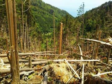 数百メートルにわたって倒木が折り重なり、荒廃した登山道(5月、大津市木戸の金毘羅峠コース)