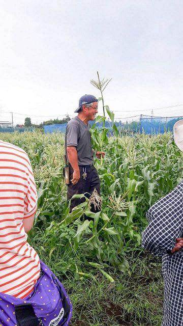 トウモロコシの収穫体験も行われた綾瀬市のバスツアー(昨年の様子、同市提供)