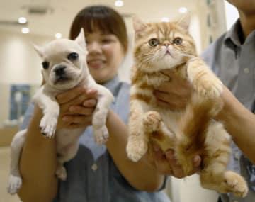 資料 A pet shop in Tokyo's Koto Ward in 2017      2017122200242