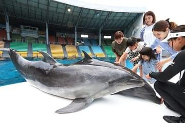 【イルカを間近で見学する来園者(和歌山県白浜町のアドベンチャーワールドで)】