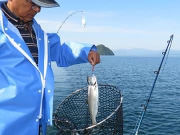 釣り上げられたビワマス。銀色に光る優美な姿が美しい琵琶湖でビワマス漁を営む寺村さん(長浜市湖北町尾上沖)