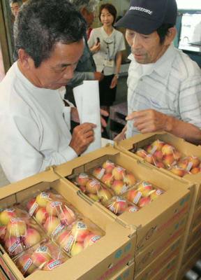 目合わせ会で集荷されたスモモを確認する生産者=13日、日田市大山町