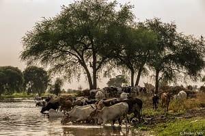 白ナイル川の流域にはさまざまな動物が生息している