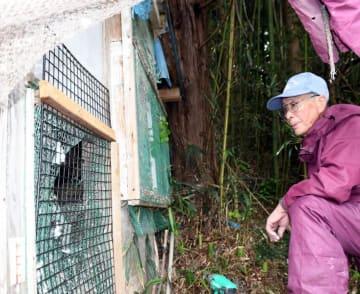 穴が開いたハト小屋を見つめる山本源一郎さん。クマは奥の山林から小屋方面を見つめていた=14日、宮古市田老