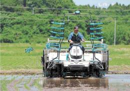 田んぼに苗を植える坂井さん。増産基調に不安がよぎる=5月26日、大崎市古川小林
