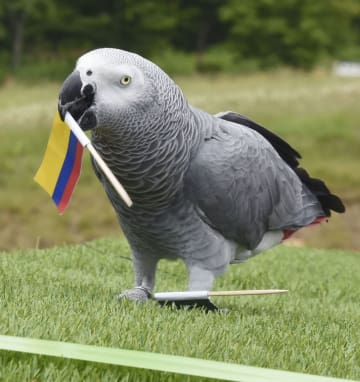 Football: World Cup parrot oracle