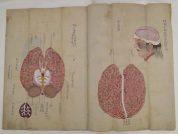「(異種)解体正図」に描かれた頭部の解剖図