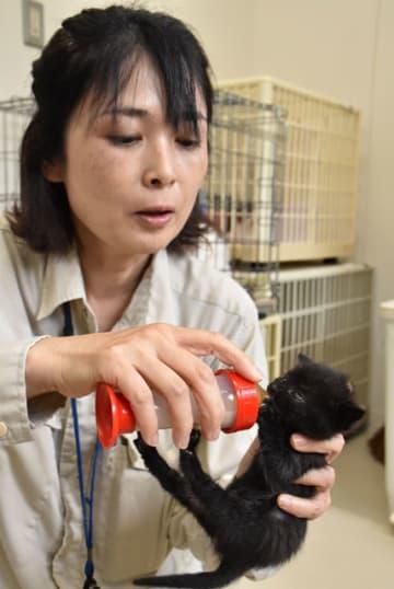 離乳前の子猫にミルクを与える職員