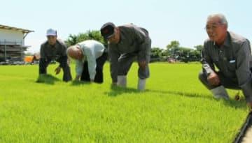 6月下旬からの田植えを前に、苗の手入れをする「農守さざれ」の呉藤征男組合長(右端)と組合員=16日、宇佐市佐々礼