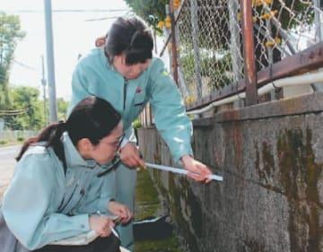 ブロック塀の劣化状況を調べる県職員=22日午前、大分市今津留の大分舞鶴高校