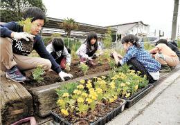 JR白石駅前の花壇にマリーゴールドを植える子どもたち