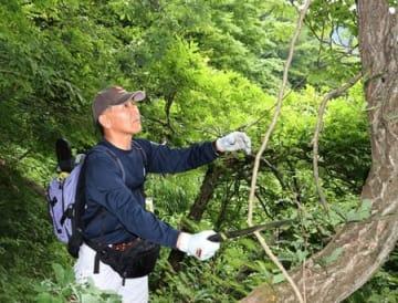 五頭連峰の登山道で枝打ちなどに取り組む阿賀野市職員の有志=23日