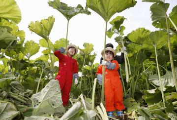 日本最大のフキとして知られるラワンブキの収穫が最盛期を迎え、農場で刈り取ったフキを手にする子どもたち=24日、北海道足寄町