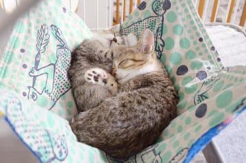保護猫カフェ「Cat Cafe Wish」でくつろぐ猫