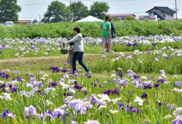 紫や白色の花をめでながら歩く来場者