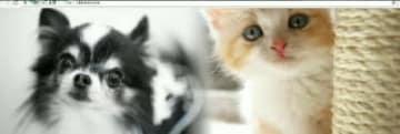 ボランティアが立ち上げた「おおいた動物愛護センター」の応援サイト