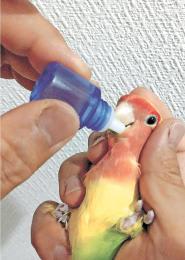 投薬の際は、小鳥にショックを与えないよう、優しく包み込むようにつかむ