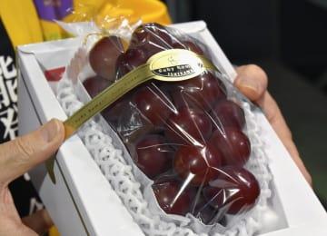 1房110万円で落札された高級ブドウ「ルビーロマン」=10日午前、金沢市