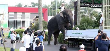 スタッフや来園者が見守る中、トラックに乗り込むアジアゾウの「みどり」=10日午後、宮崎市フェニックス自然動物園