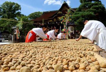 炎天下、「大福梅」の土用干しに取り組む巫女や神職たち(10日午後2時半ごろ、京都市上京区・北野天満宮)