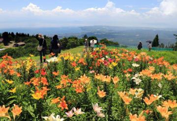 琵琶湖を見下ろす山上で花開く色とりどりのユリ(10日午前10時45分、高島市今津町・びわこ箱館山ゆり園)