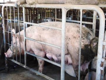 ストレスの多い飼育環境では病気になりやすい