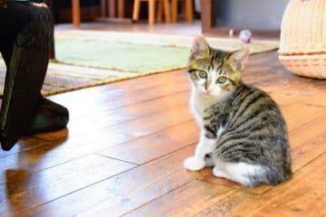 カフェでくつろぐ保護猫=鎌倉ねこの間