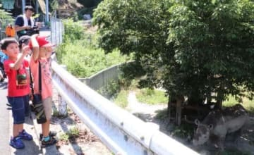クロサイのハナの長寿世界記録の更新を祝う子どもたち(広島市安佐動物公園)
