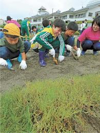 校庭に芝を植える地元の子どもたち