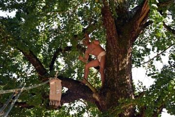 神旗を結びつけた長さ18メートルの竹をイチョウの木に引き上げる神旗人=みやき町の綾部神社