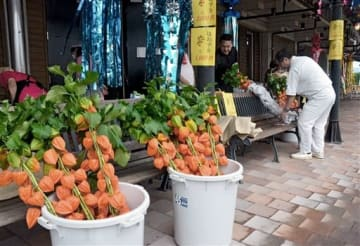 オレンジ色のホオズキが並ぶ「ほおずき市」=あさぎり町