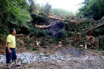 木がなぎ倒された土砂崩れの現場(舞鶴市上福井)