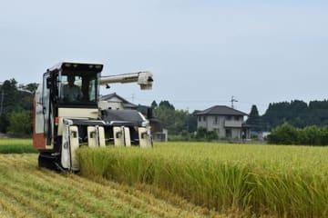 大きく実った「五百川」を収穫するコンバイン=17日、いすみ市