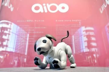ソニーの家庭用犬型ロボット「aibo(アイボ)」=1月、東京都港区の同社本社