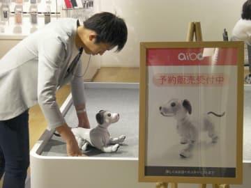 「aibo(アイボ)」の予約販売を始めたソニーストア=19日午前、東京都中央区