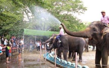 親子連れを中心に人気のある夏の恒例行事「ぞうさんの水浴び」=市原市の市原ぞうの国